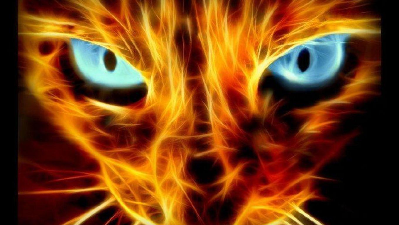 #Halloween #Cat