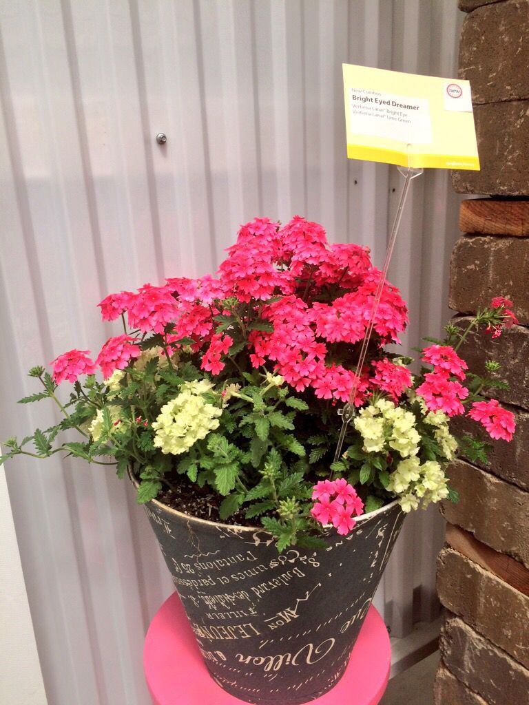 lampshade planter. Grab the lampshade from Lowes along