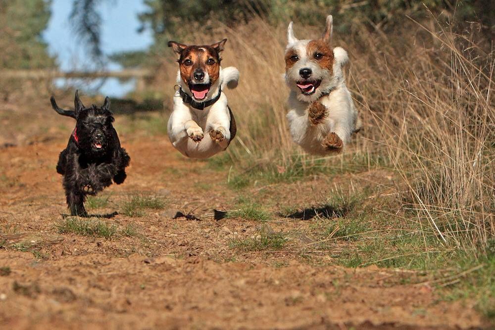Airborne Flying Dog Cute Animals