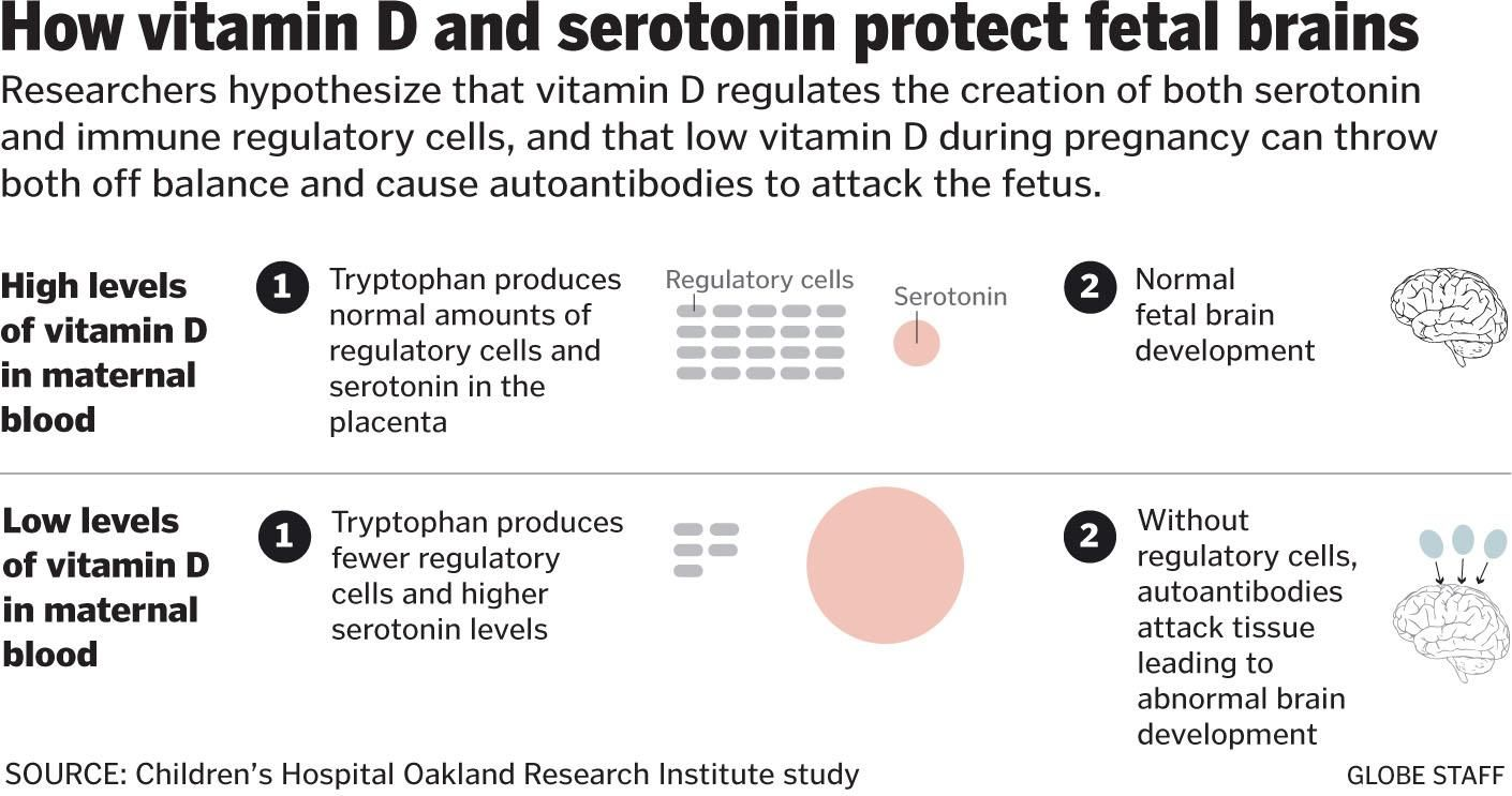 d vitamin serotonin