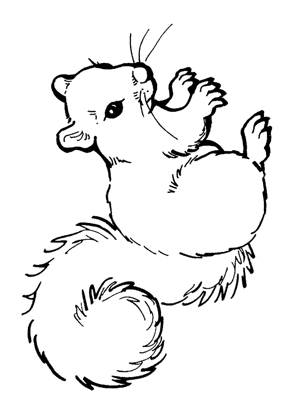 Baby Raccoon Coloring Page Baby raccoon Raccoons and Babies