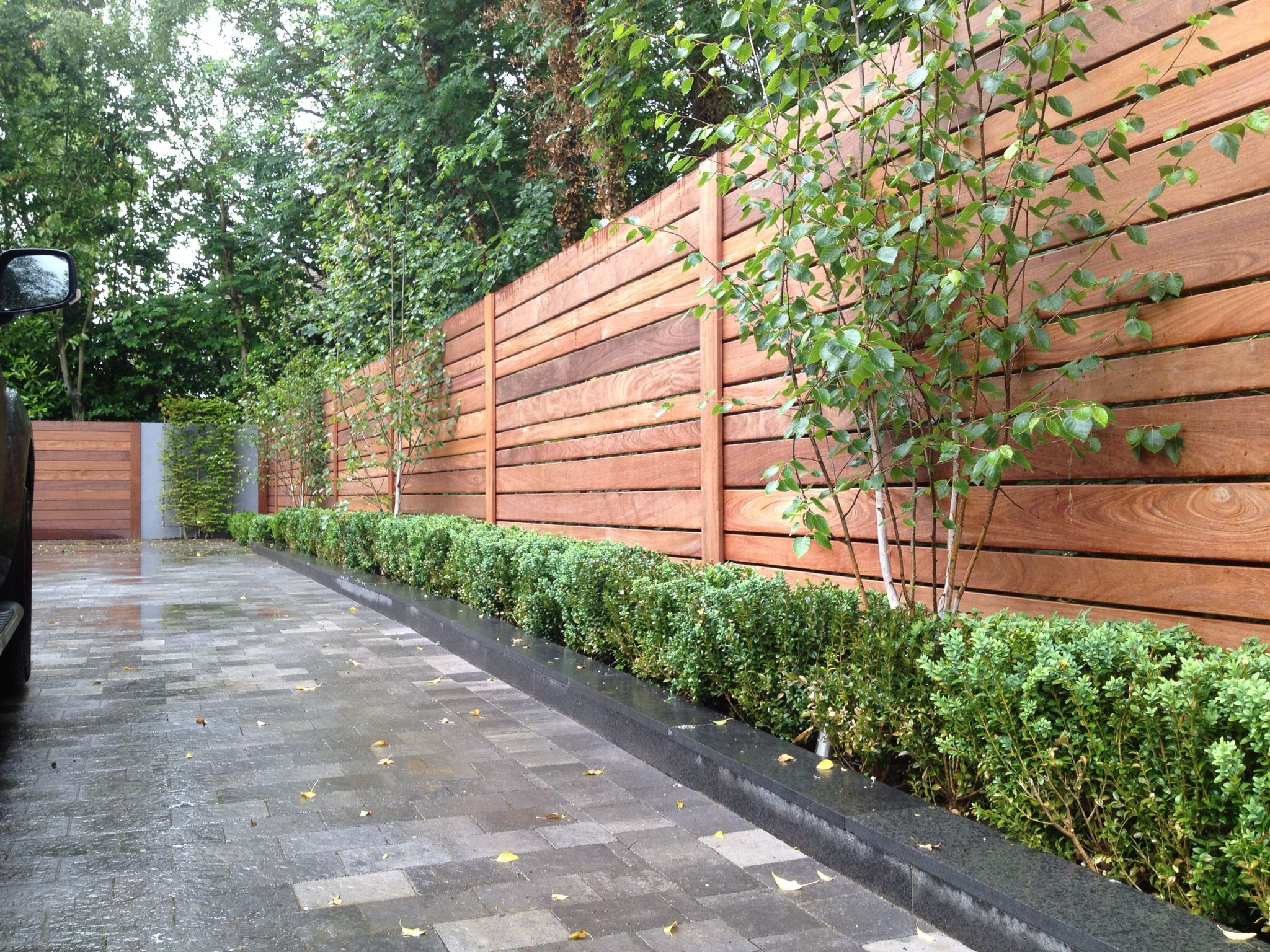 Ipe hardwood fence with birch box hedging slatted timber ipe hardwood fence with birch box hedging baanklon Gallery