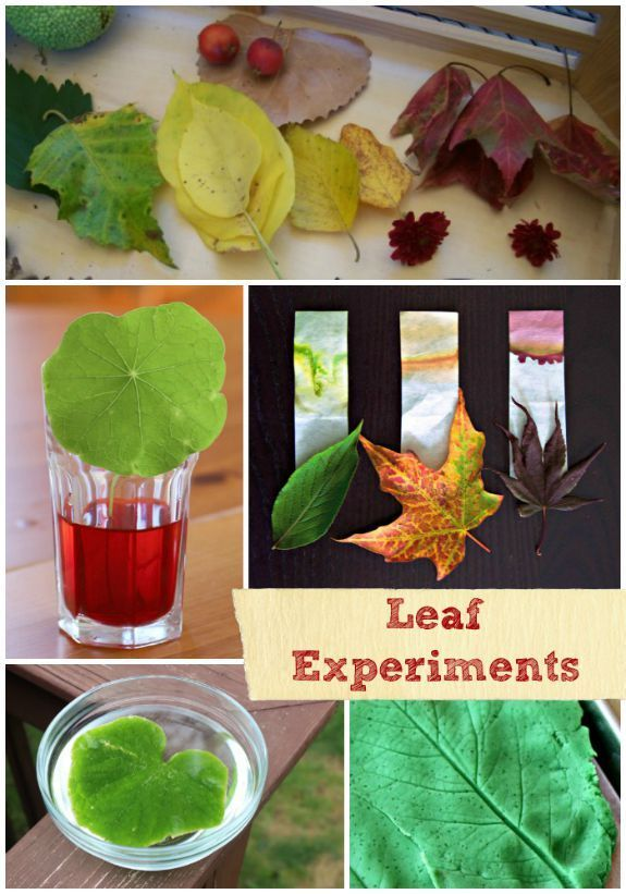 18 Fall Science Experiments & Crafts using Real Leaves