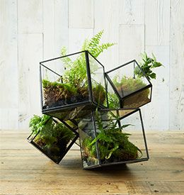 How To Make A Tabletop Terrarium Love The Chaotic Shape Of The Planter.  Maybe For