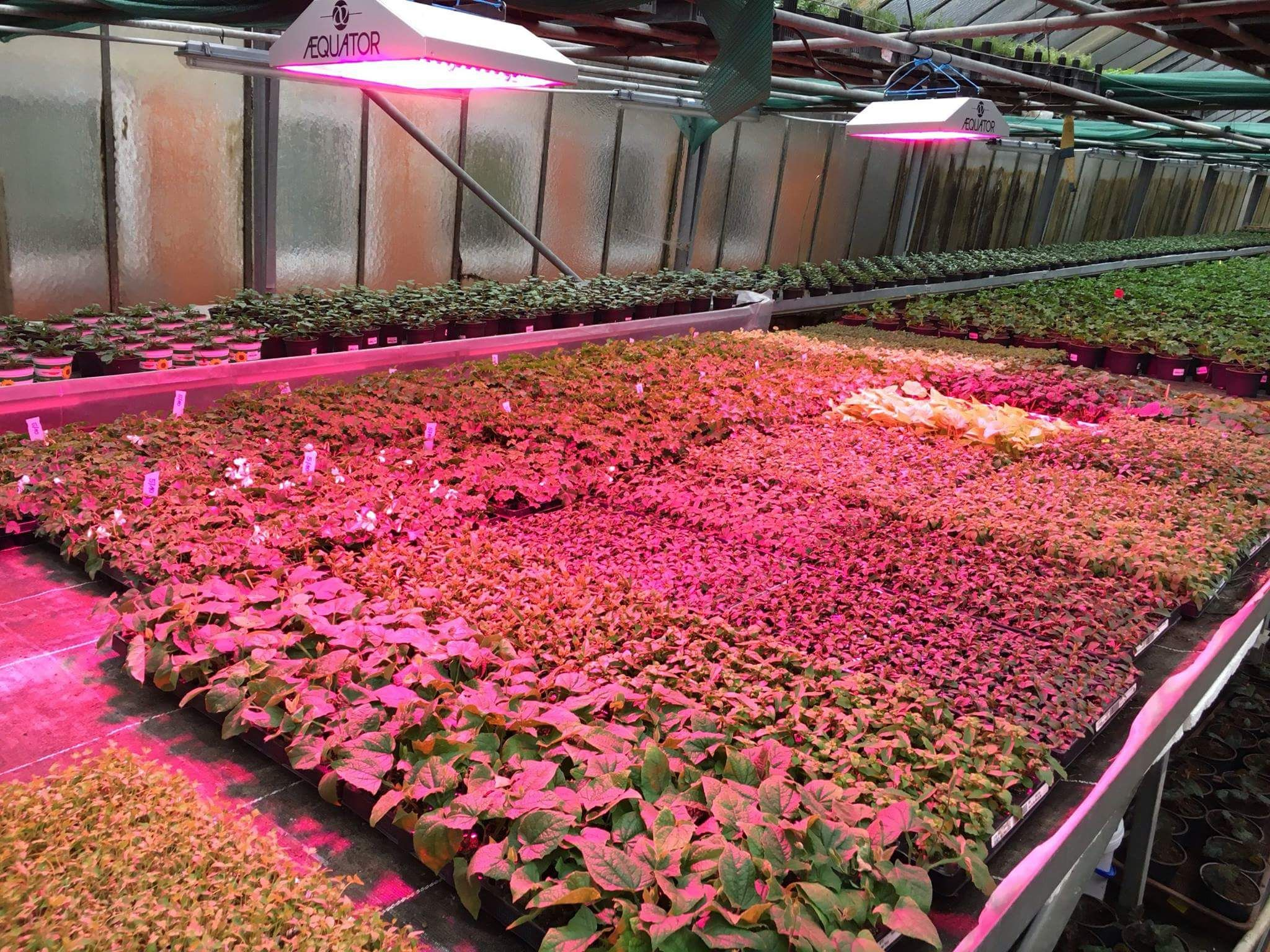 Mayr Gartengenuss Led Pflanzen Lampe Licht Beleuchtung Gartenbau Gemusebau Gartnerei Horticulture Greenh Pflanzenlampe Pflanzen Pflanzenbeleuchtung