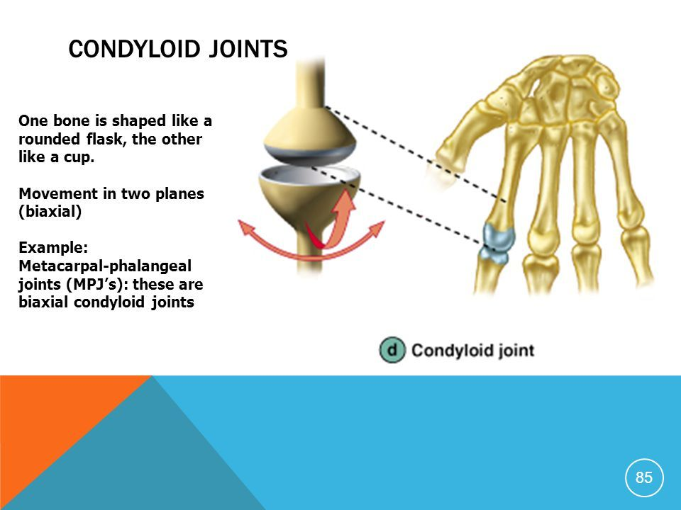 Image result for condyloid joint | Joints of the Upper ... Condyloid Joint Examples