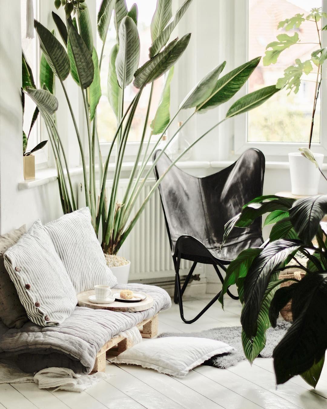 Diytransitionaldecoration interior design plants indoor garden green transitional also diy decoration pinterest rh