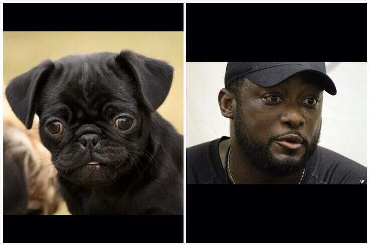 I Want A Pug And I Ll Name Him Mike Tomlin Social Media