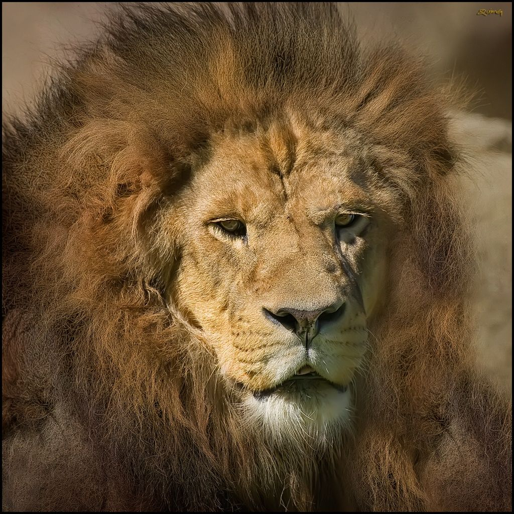 0166 The King by Quim Granell on 500px