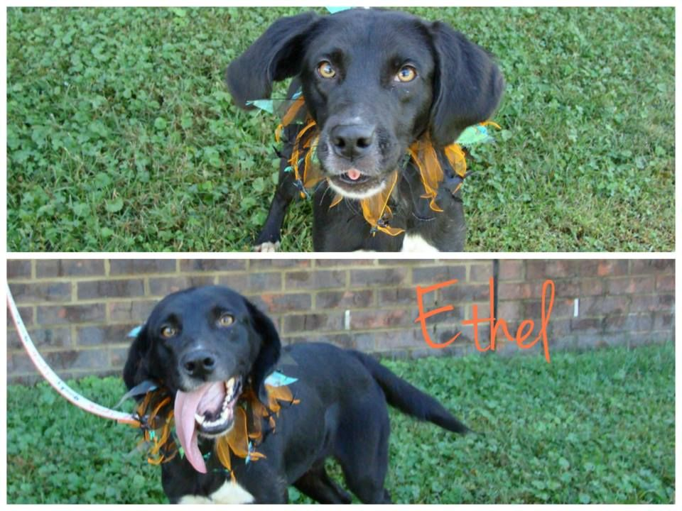 Dogs Available Now! East Ridge Animal Services