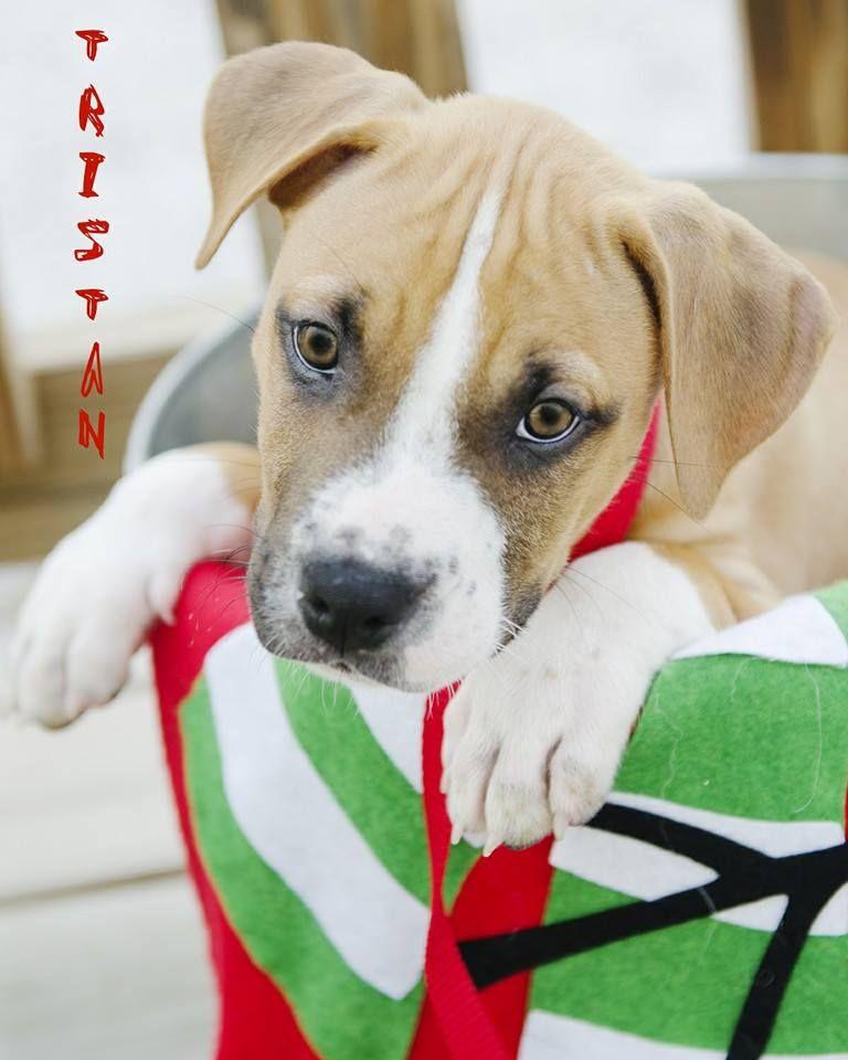 Tristan Nate's Honor Animal Rescue Animal rescue