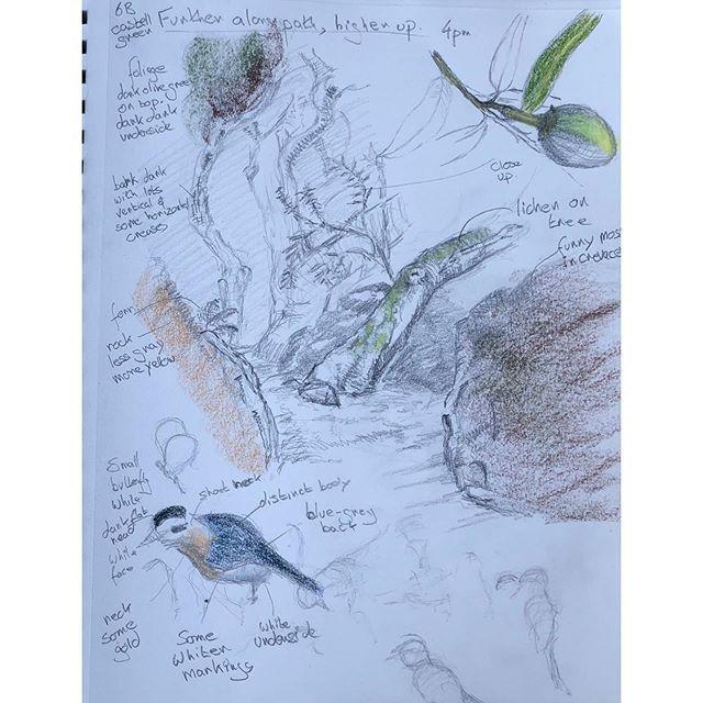 Nhi101x Newcastlexnhi Naturalhistoryillustration Edx Study Illustration Nhi101x Newcastlexnhi Observational Drawing Scientific Illustration Sketches