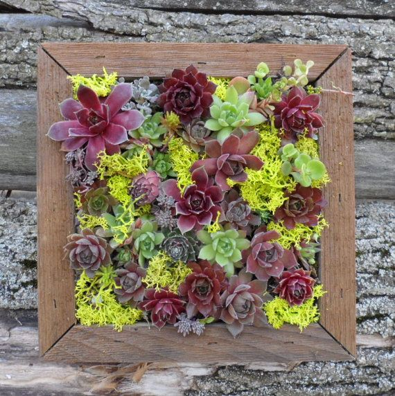 Succulent Vertical Living Wall Art Kit 12 Inch Buy This Or We Can Make Custom Sizes