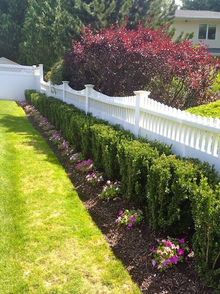Greenspire Euonymus Drought Tolerant Front Yard