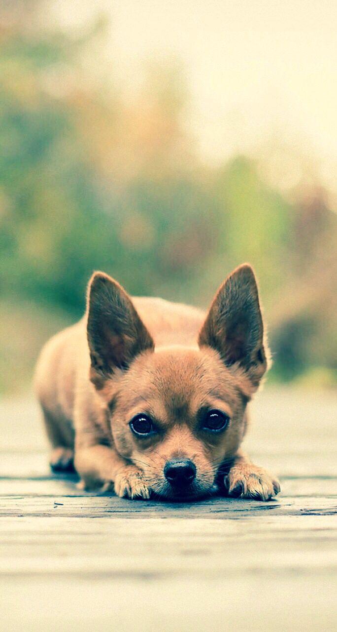 I want this puppy fun stuff pinterest