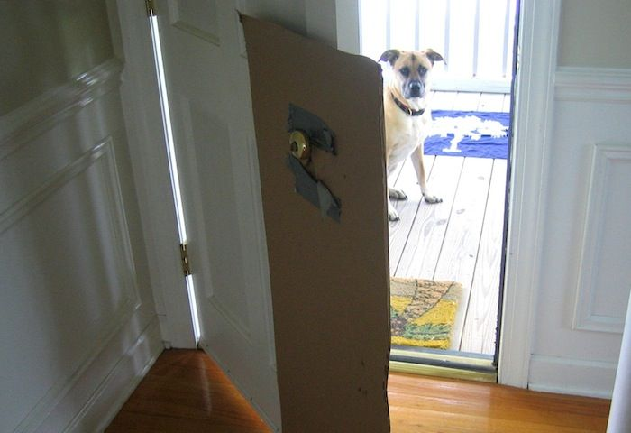The Story Behind Clawguard Dog Scratching Door Door Protector Simple Packaging