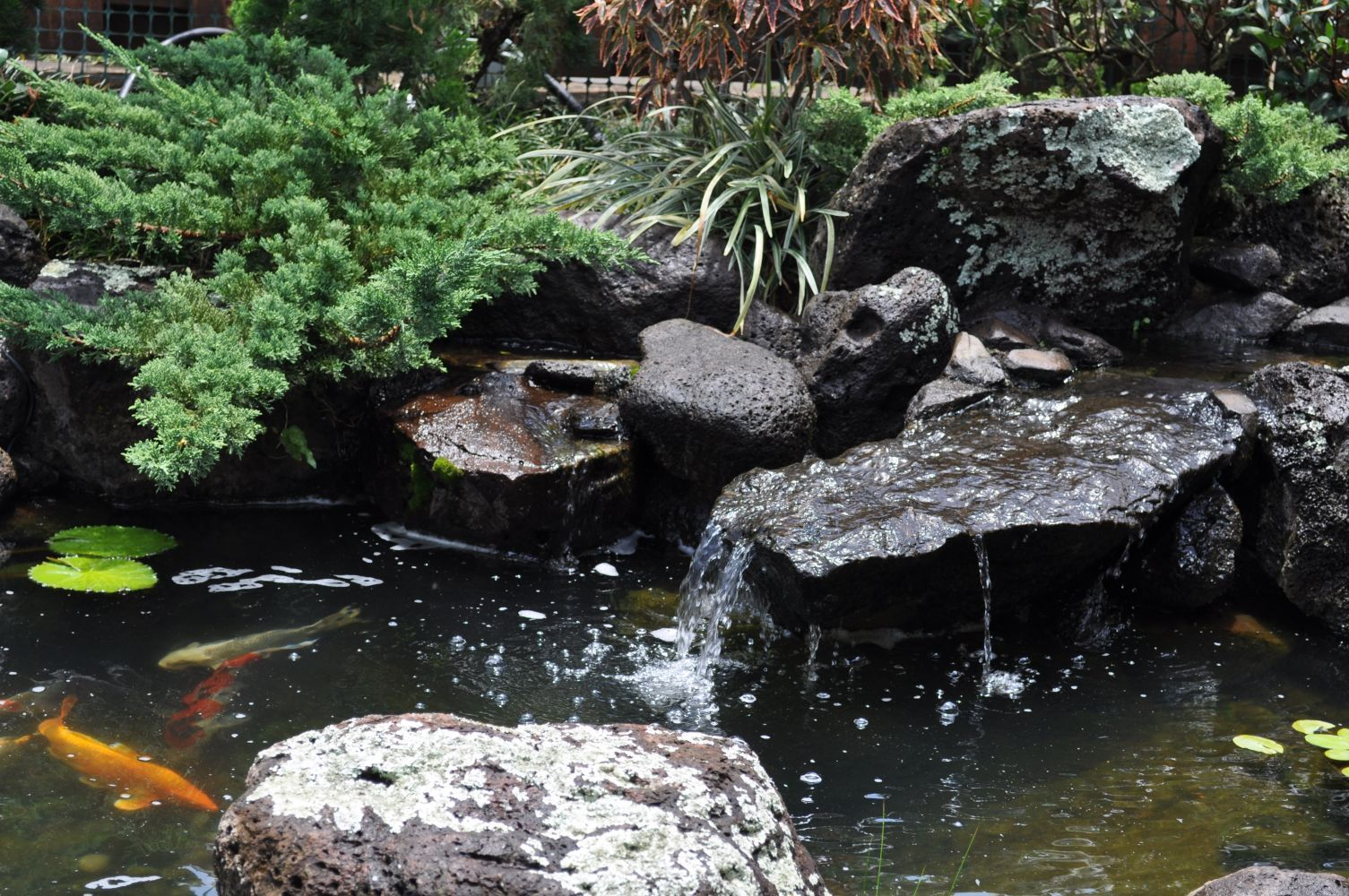 Merveilleux Japanese Koi Pond | Japanese Water Fountain Picture Gallery : Beautiful Koi  Pond .