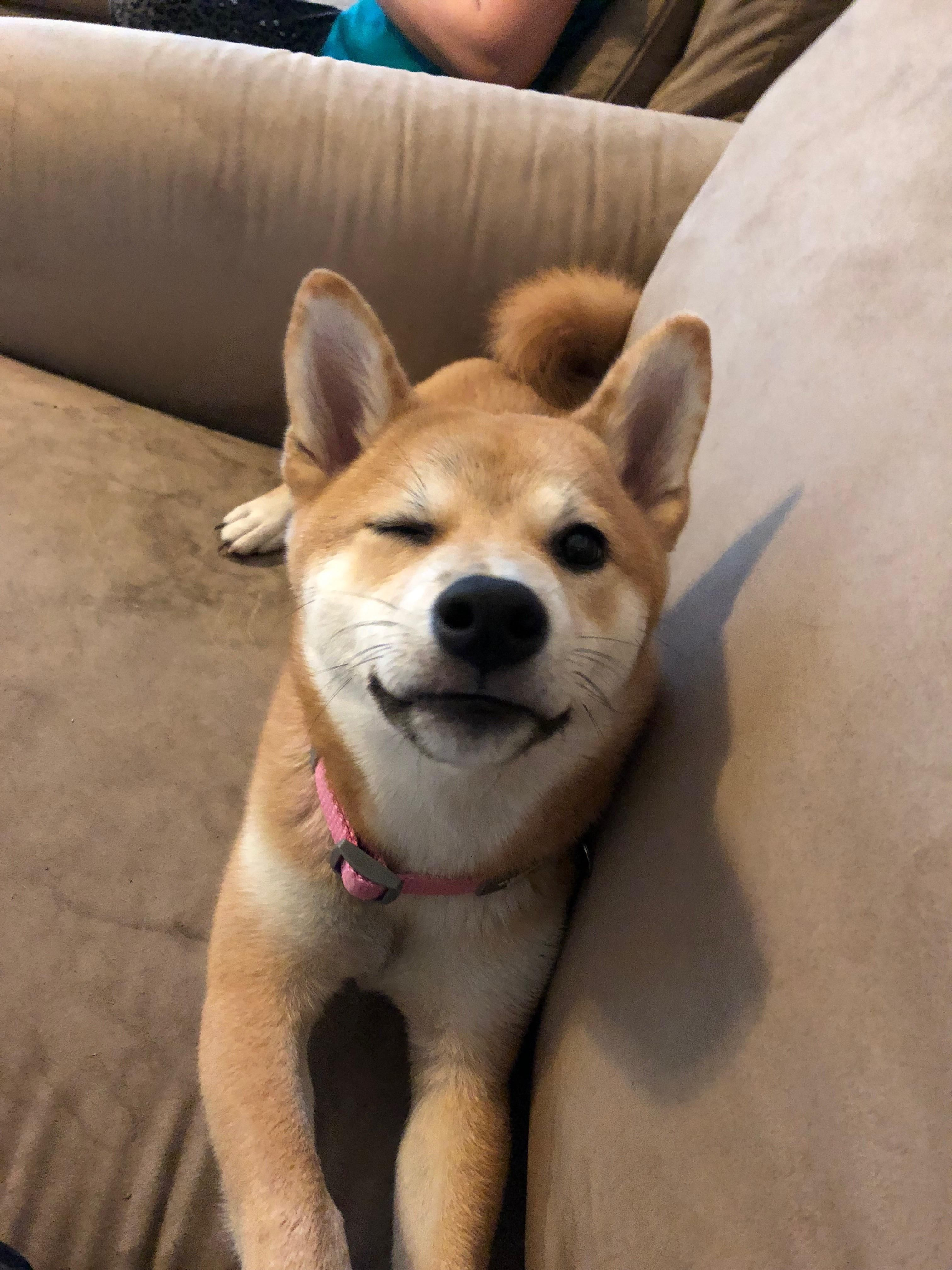 Here S An Old Picture Of My Shibe Winking At Me Shibainu Shibainupuppies Shiba Inu Shiba Inu Dog Cute Dogs