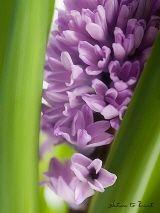 Blumenbild: Frühling bahnt sich den Weg