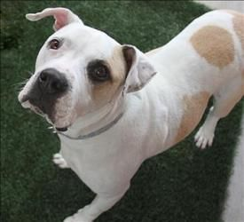 Adopt Mason On Adoptable Pets In The Dallas Ft Worth Area Dog