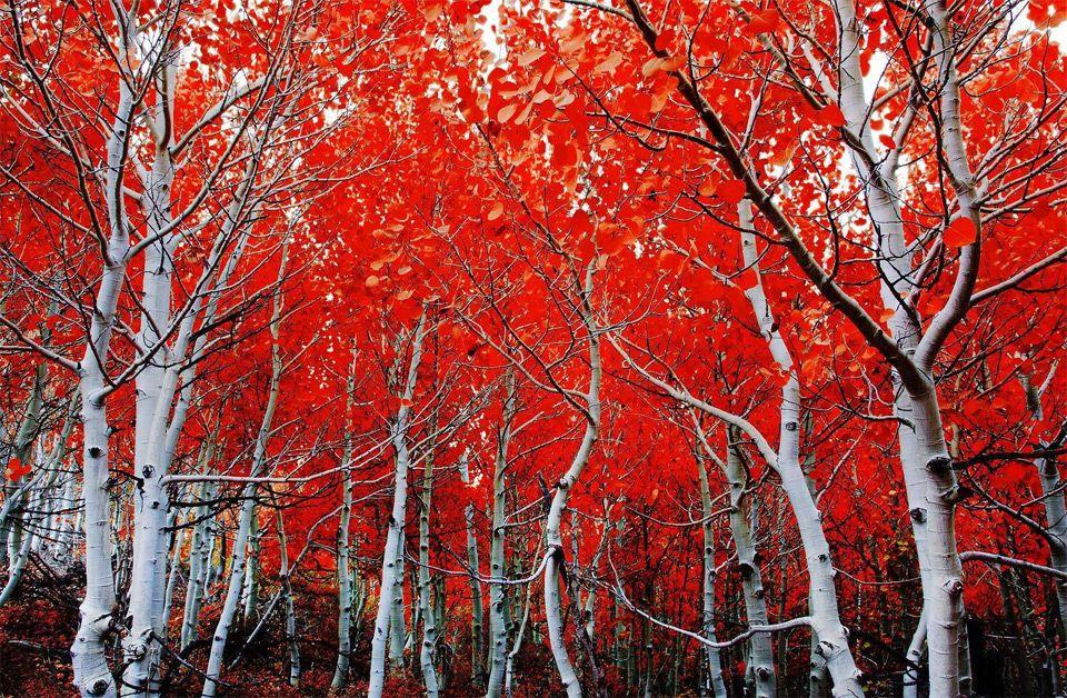 California In Autumn Photo Beautiful
