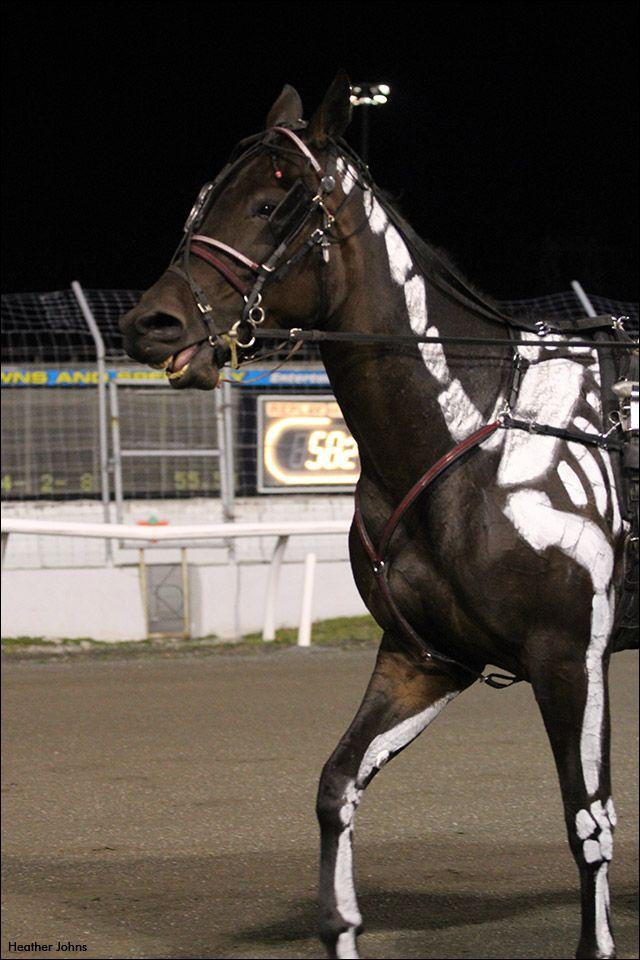 Harness Racing S Spookiest Horse