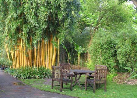 Bambus garten  61 Ideen Für Bambus Im Garten – Als Sichtschutz Oder Deko ...
