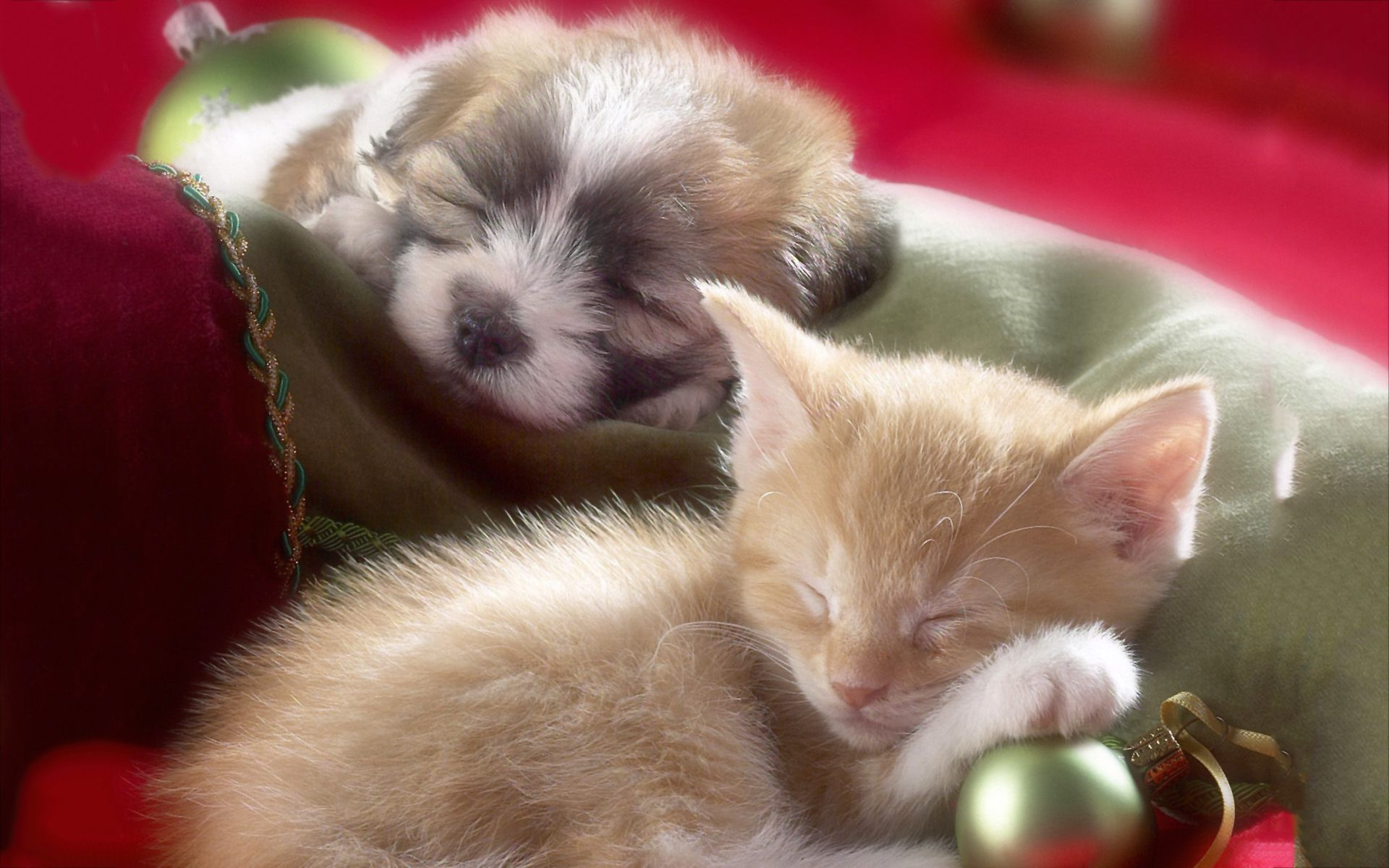 Kitten And Puppy Wallpapers High Quality Resolution Kittens And Puppies Puppy Wallpaper Baby Animals