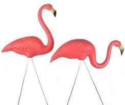 Resultado de imagem para flamingos