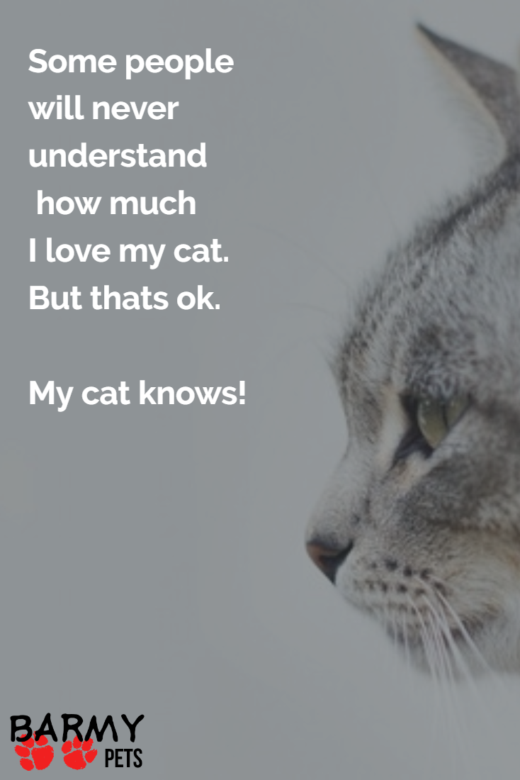 Cat Love Quotes Some people will never understand how much I love my cat. But  Cat Love Quotes