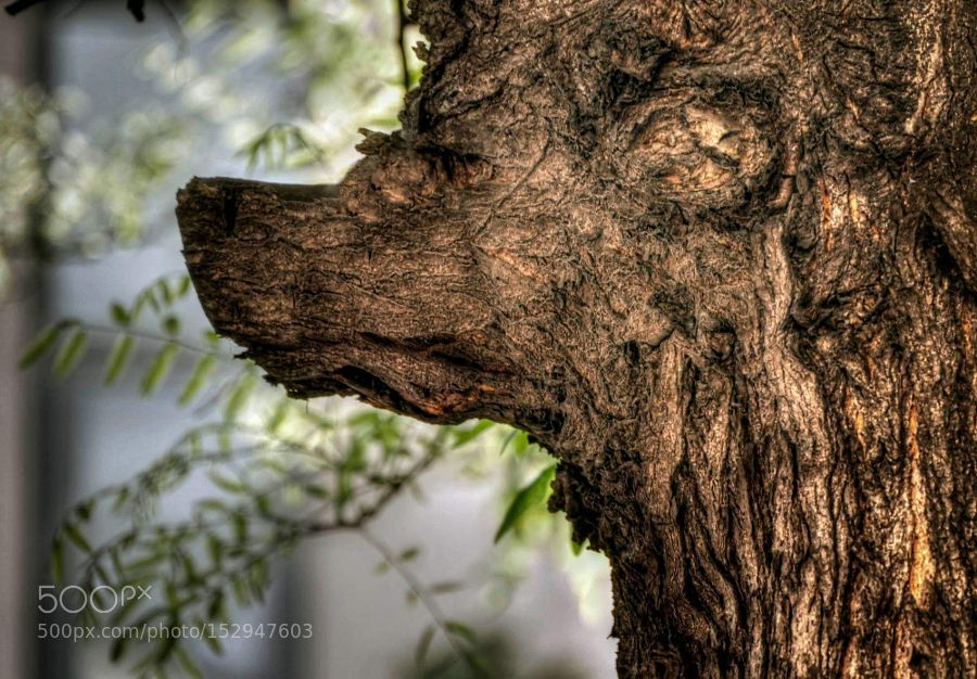 Special tree by 74mzsolt