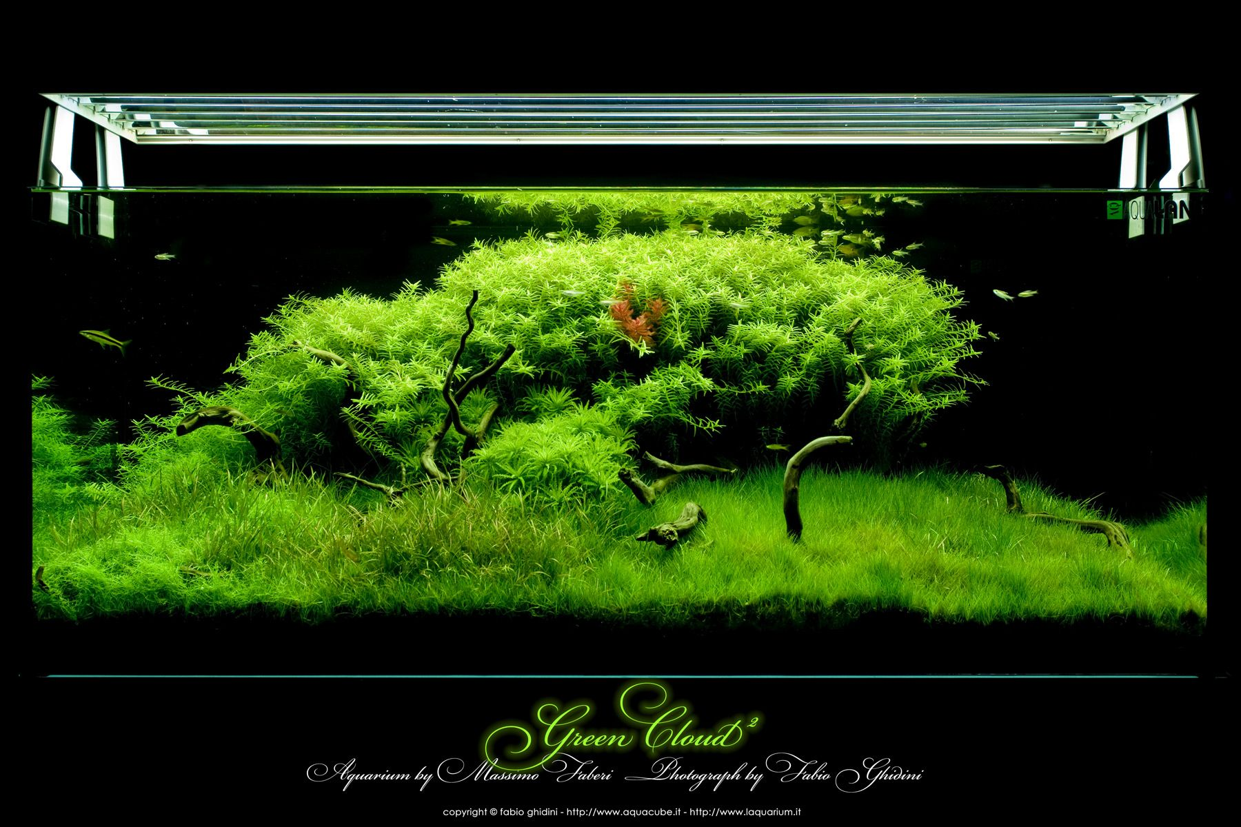 b457cb1431581c33fac21c72409f4832 Frais De Aquarium Amazonien Concept