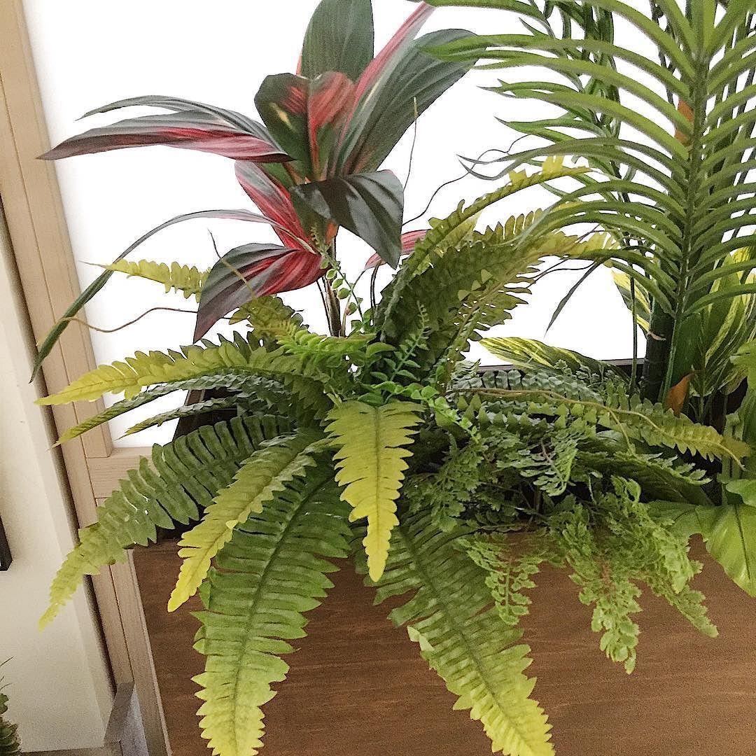 シダです昔はジメジメした印象でおじさんのグリーンでしたが最近はイメージが変わりその造形が素敵と見直されたグリーンです . 確かに折り重なる葉のコントラストも綺麗ですね . #シダ #グリーンのある暮らし #プランターボックス #フェイクグリーン #造花ドットコム #造花 #グリーンのある暮らし #人工観葉植物 #インテリアグリーン #ボストンファーン