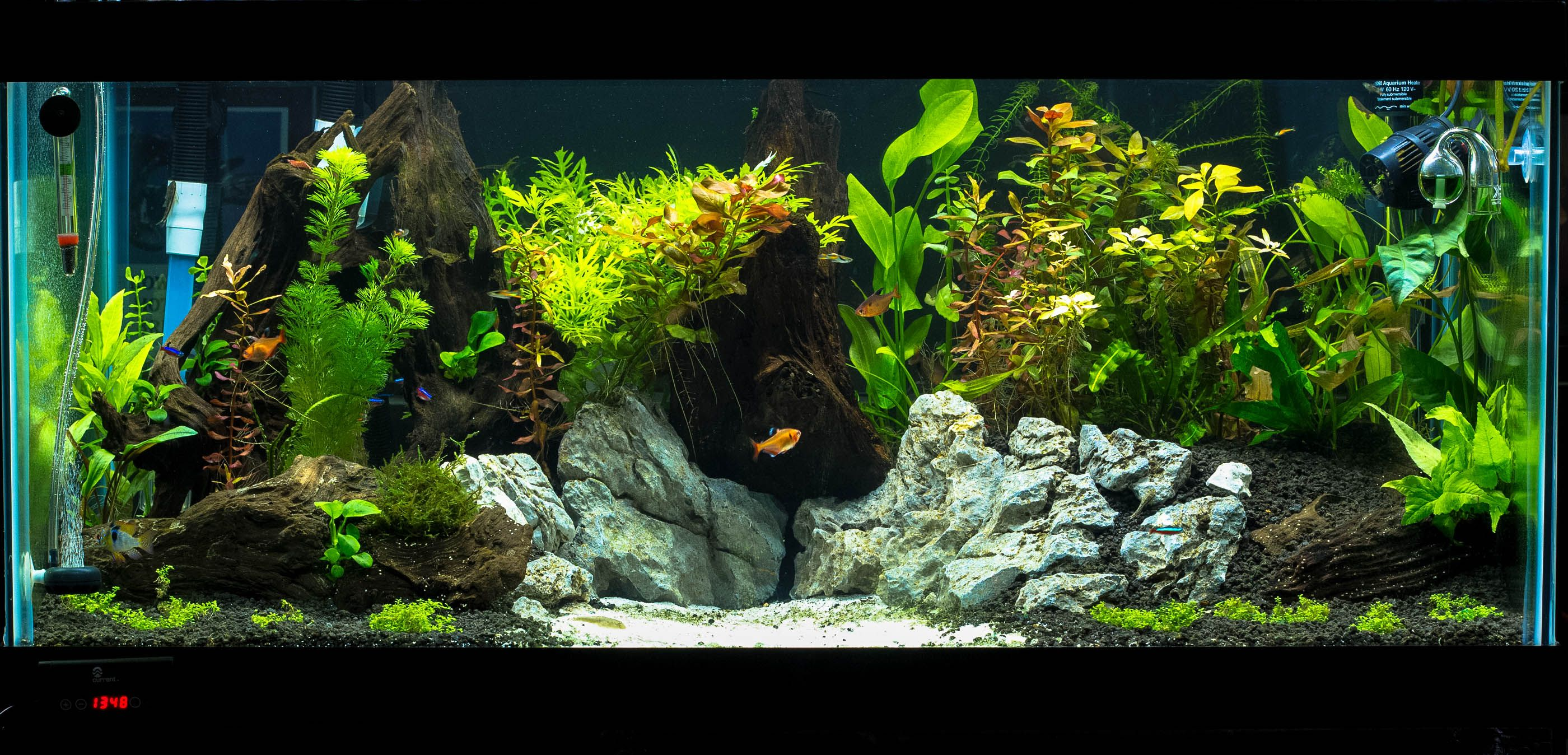 40 Gallon Breeder Love The Layout And The Stand Fish Tank Aquarium Fish Tank 40 Gallon Aquarium
