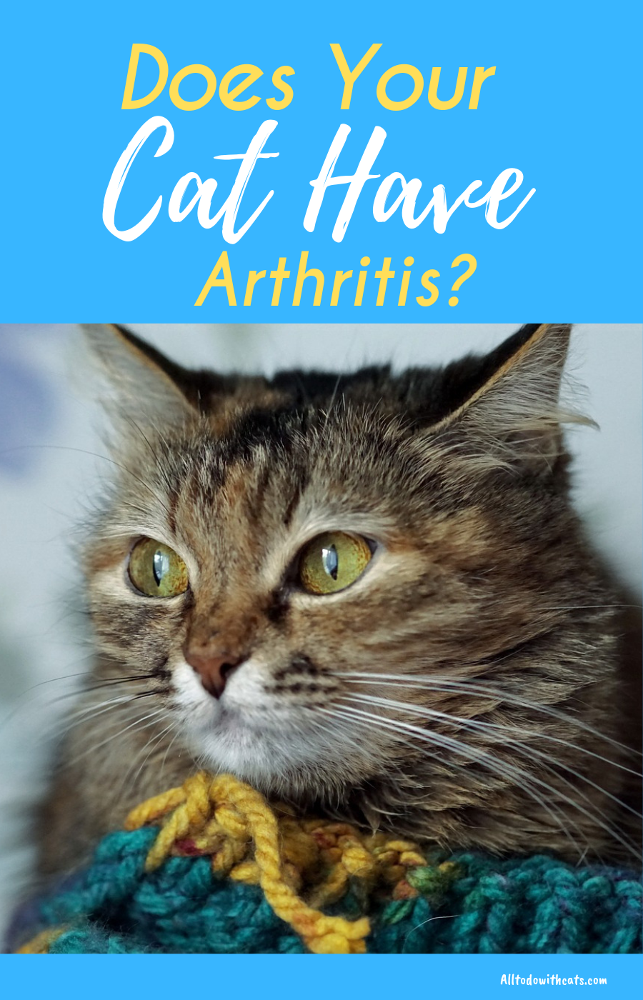 What Is Arthritis In Cats What You Need To Know All To Do With Cats Feline Health Older Cats Cat Health