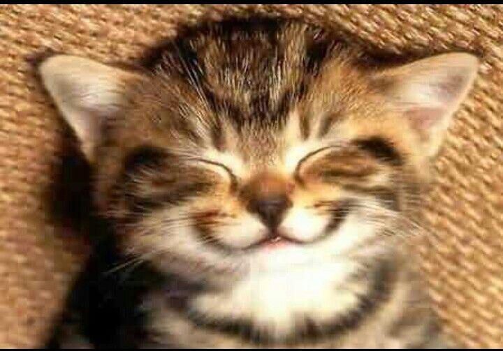 Happy cat