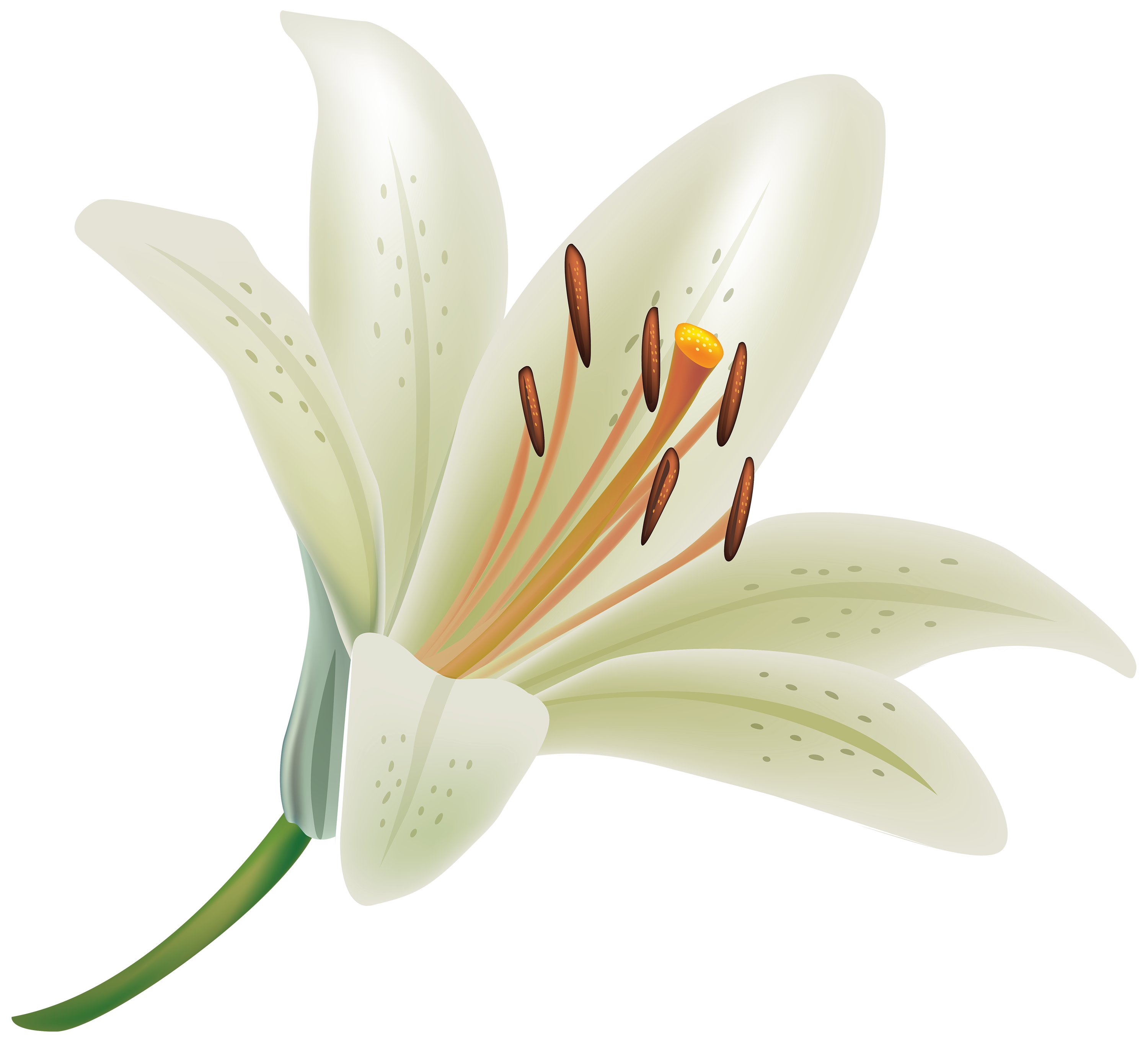 Earth Lily wallpapers (Desktop, Phone, Tablet) Awesome
