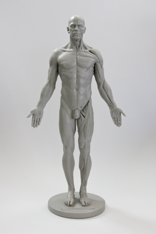 Review: 3D Total Male Anatomy Figure | Blender Cookie | Zbrush ...