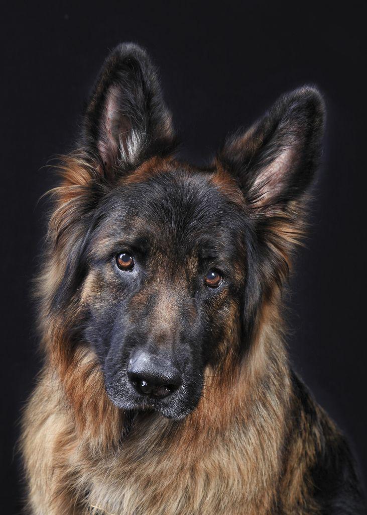 Hawk the Hero Rescue dogs, Search, rescue dogs, Search