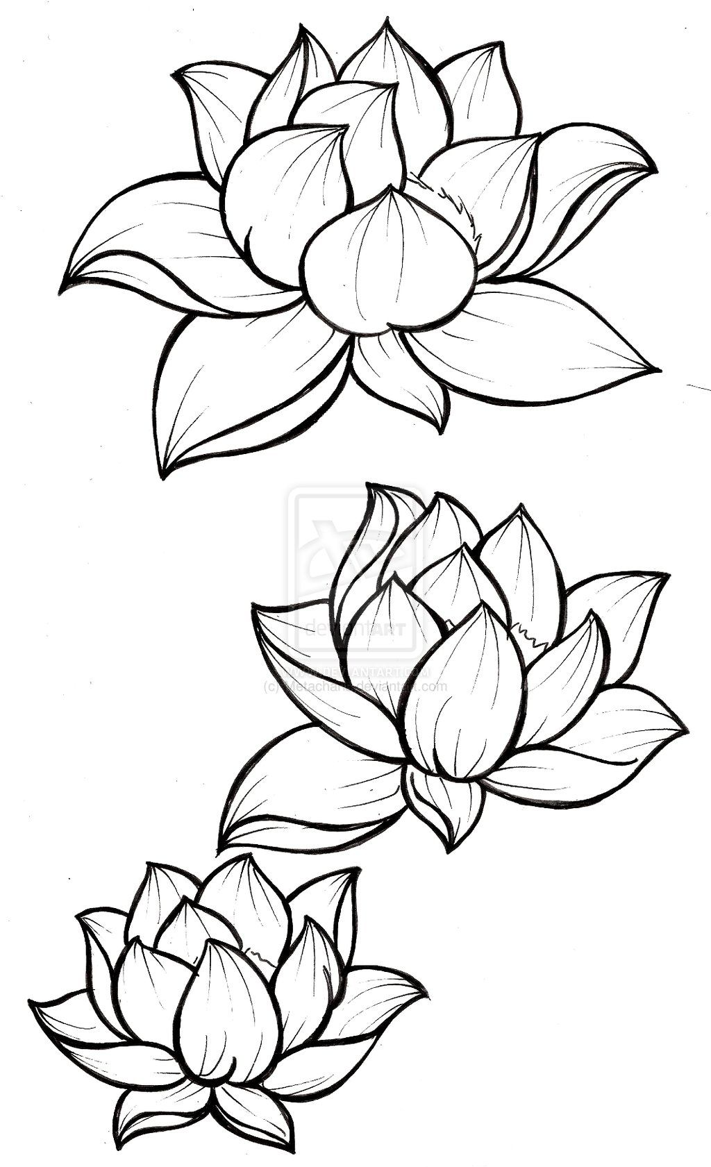Black Line Drawing Tattoo : Lotus blossom tattoos on pinterest