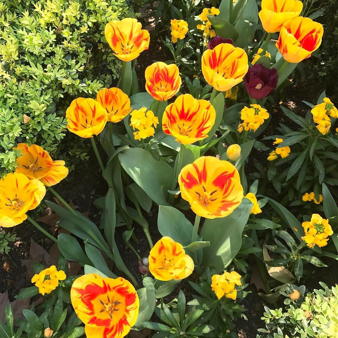 #nofilter #colourpalette #inspiration #spring #london #fashiondesign #fashiondesigner #ausfashionlabel