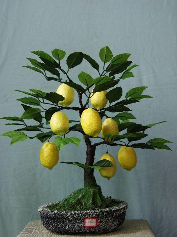Geliebte Bonsai Baum / Bonsai Tree + Zitrone / Lemon + Zitrusfrüchte &YT_54