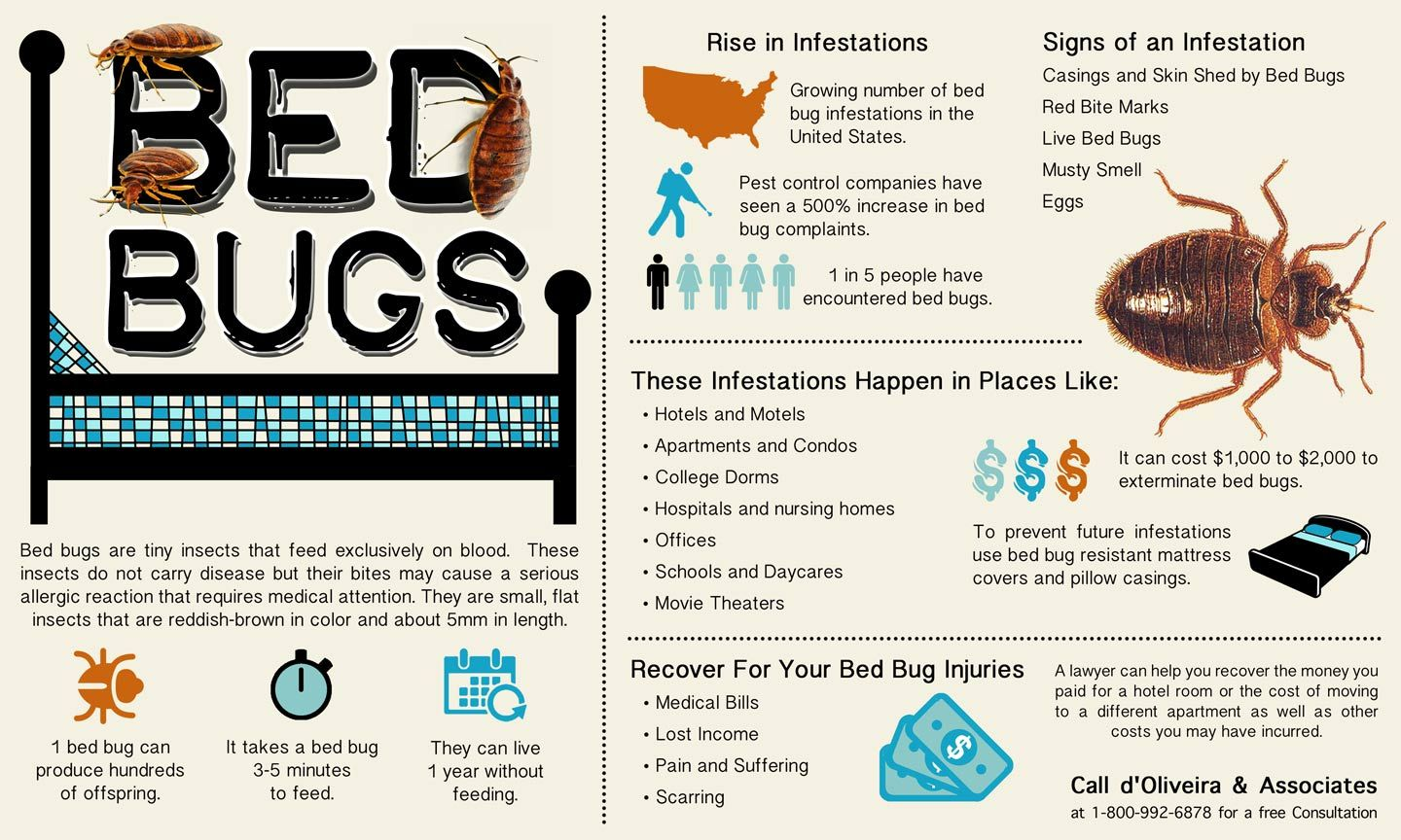 Help With Many Types Of Personal Injury Cases Bed Bug Bites Bed