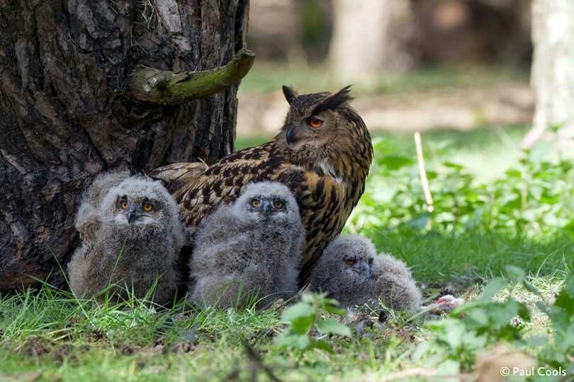Oehoefamilie