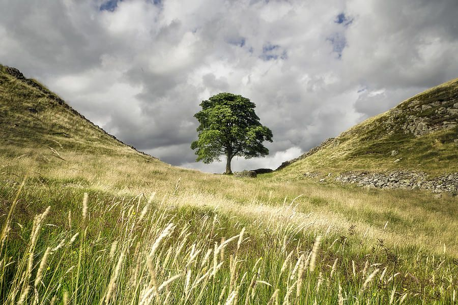sycamore gap hadrians wall chris frost jpg 900 600 videos on hadrians wall id=62073
