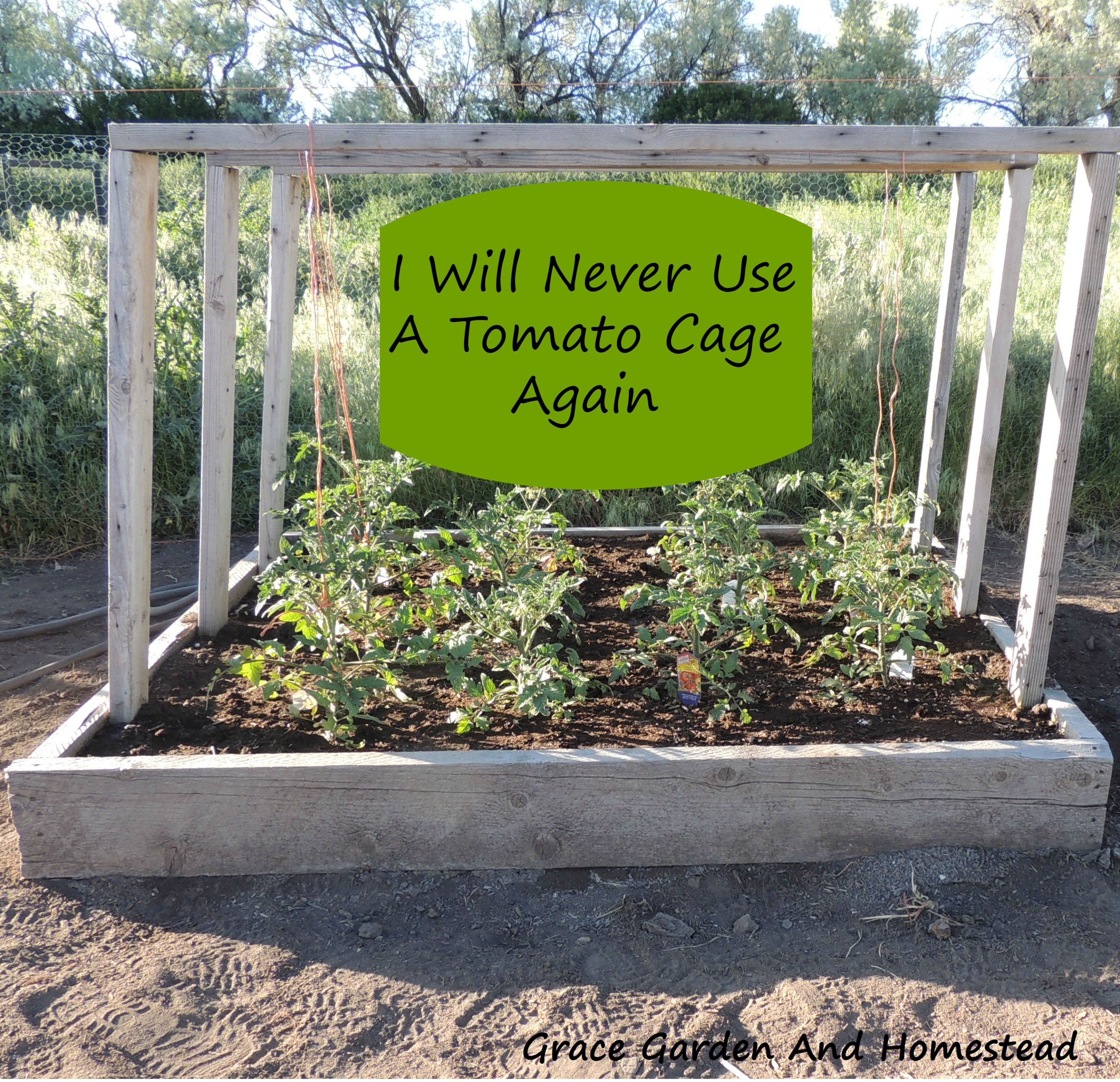 Tomato Planter Tomato Garden Tomato Planter Tomato Trellis 640 x 480