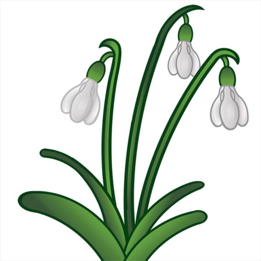 Astronomiczna Wiosna Ozdoby Przebisniegi Flower Painting Art Projects Plant Painting