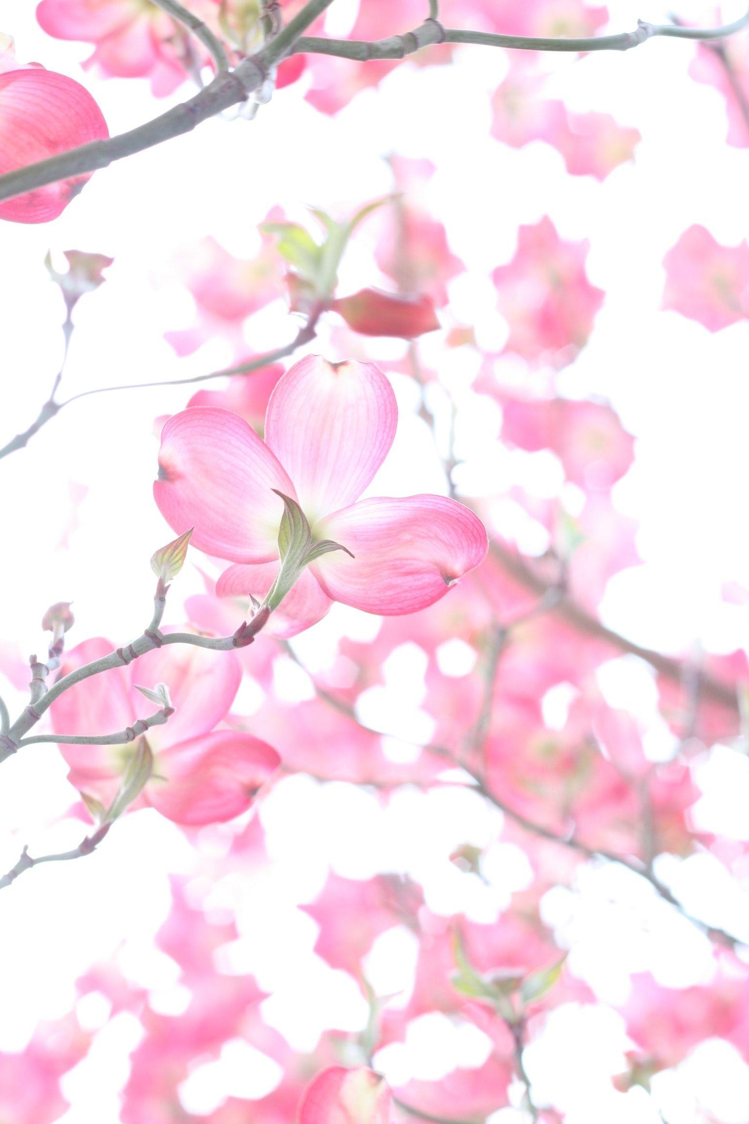 Relationship Benefits Of Couples Massage Organic Gardening Gardening Tips Flower Images