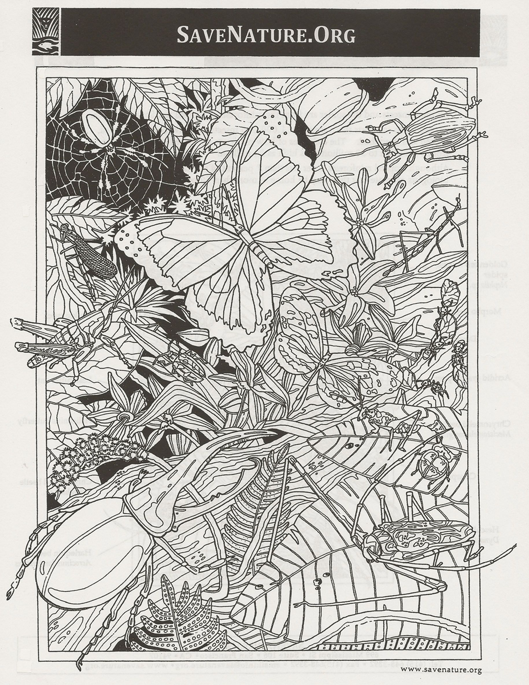 bug coloring page worksheets and insects