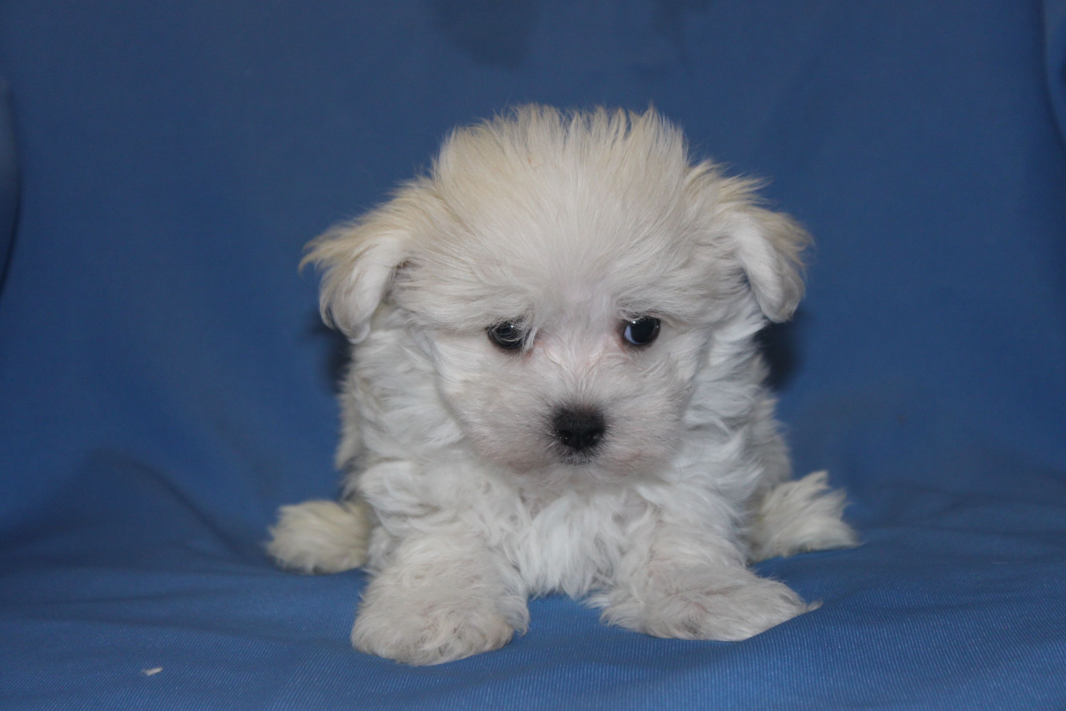 This male was just placed for sale at